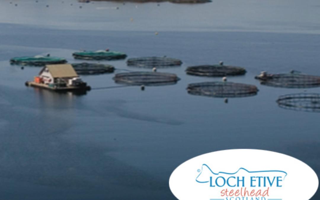 Loch Etive Steelhead Trout